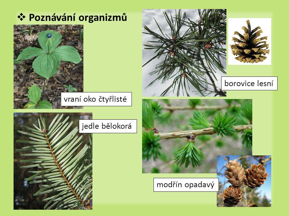  Poznávání organizmů vraní oko čtyřlisté borovice lesní jedle bělokorá modřín opadavý