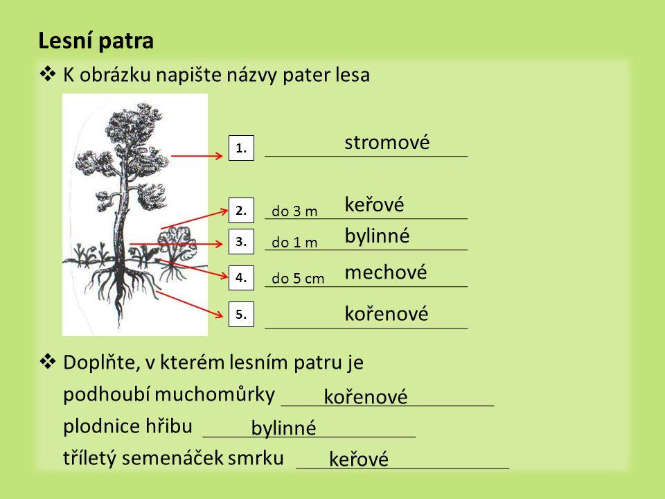 organizmy v lese  Ke schématu potravního řetězce vymyslete příklady organizmů producenti Konzumenti býložravci Konzumenti masožravci rozkladači
