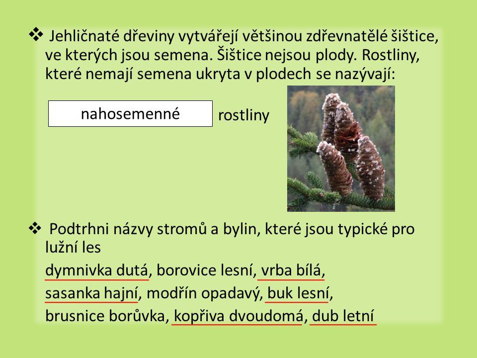  Jehličnaté dřeviny vytvářejí většinou zdřevnatělé šištice, ve kterých jsou semena. Šištice nejsou plody. Rostliny, které nemají semena ukryta v plod
