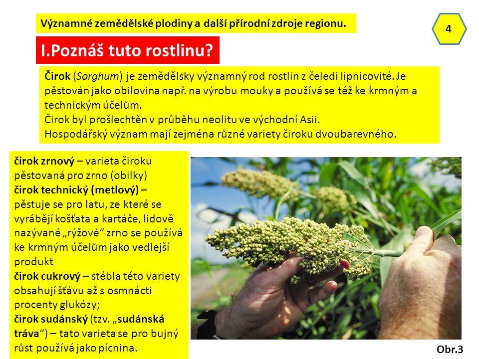 Významné zemědělské plodiny a další přírodní zdroje regionu. 4 Obr.3 I.Poznáš tuto rostlinu? Čirok (Sorghum) je zemědělsky významný rod rostlin z čele