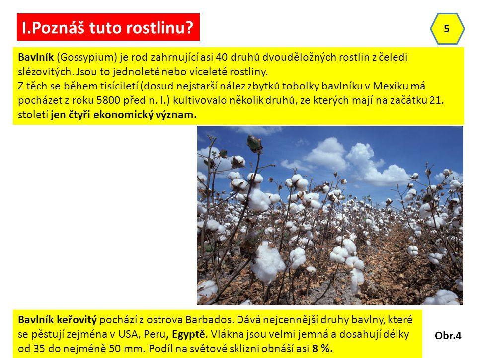 5 I.Poznáš tuto rostlinu? Bavlník (Gossypium) je rod zahrnující asi 40 druhů dvouděložných rostlin z čeledi slézovitých. Jsou to jednoleté nebo vícele