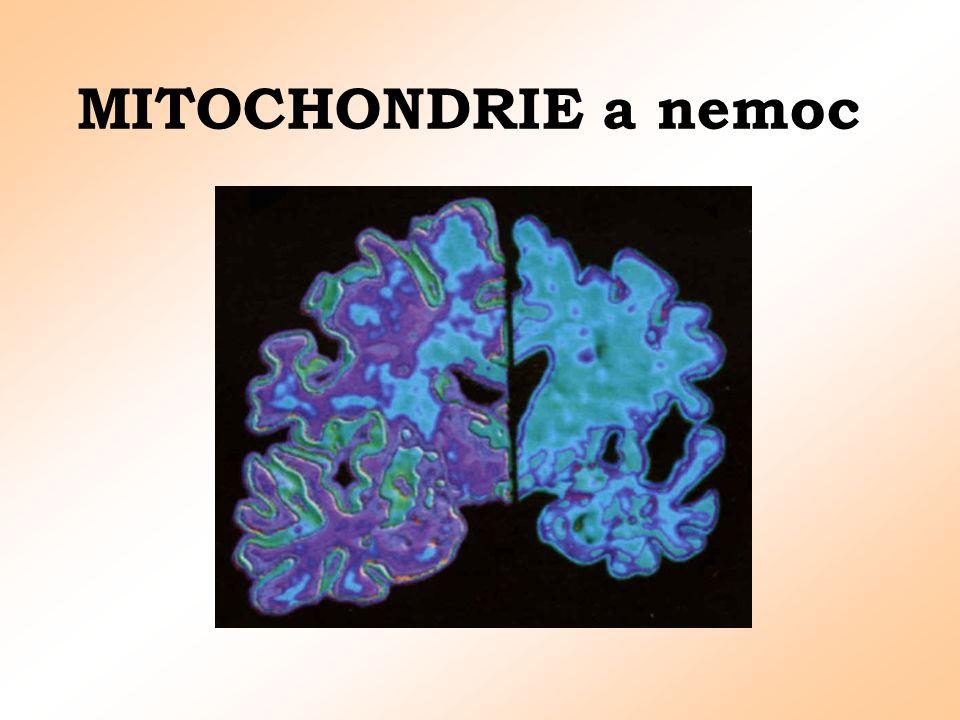 Mutace mtDNA Heteroplasie * Jedna buňka - stovky MTCH * Jedna MTCH - mnoho kopií mtDNA = mutace nejsou uniformní, výskyt na subpopulaci genomu v rámci buňky nebo organely - projev poruchy až po překročení určité limitní hodnoty mutací - stupeň bioenergetických poruch se liší podle orgánu a jednotlivce - replikační kinetika MTCH -mateřská dědičnost MTCH odstranění MTCH spermatozoidů proteazomem vysoká tvorba energie = tvorba ROS = poškození DNA.