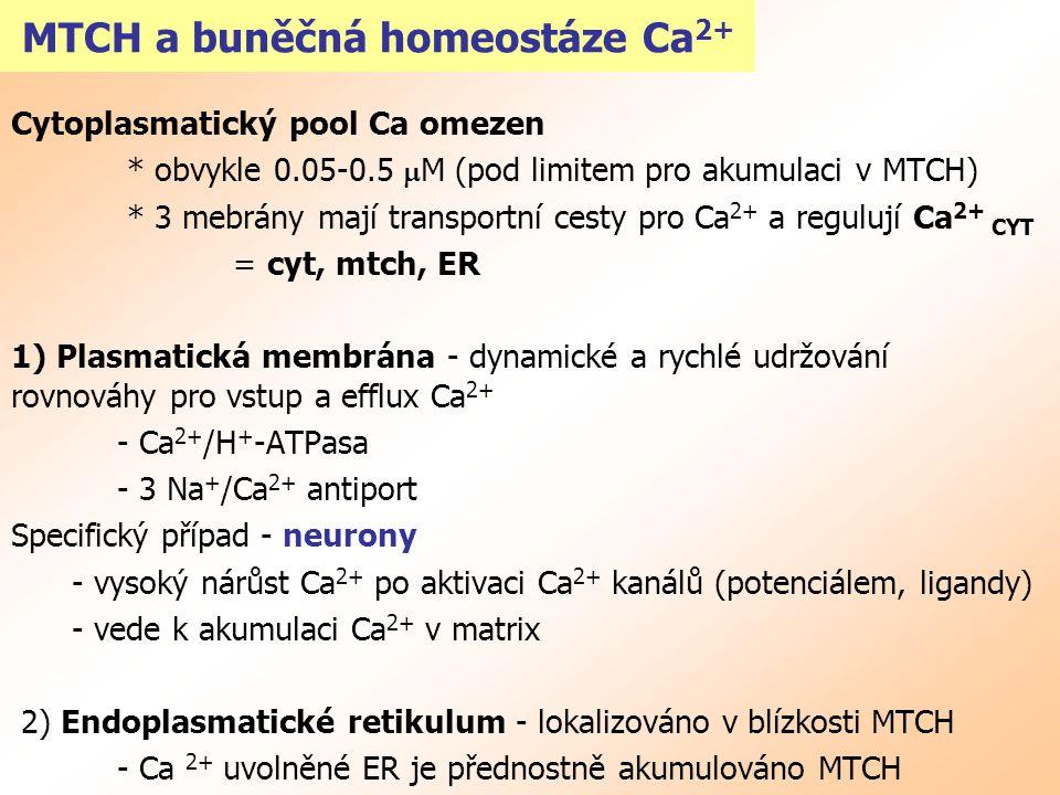 MTCH a buněčná homeostáze Ca 2+ Cytoplasmatický pool Ca omezen * obvykle 0.05-0.5  M (pod limitem pro akumulaci v MTCH) * 3 mebrány mají transportní