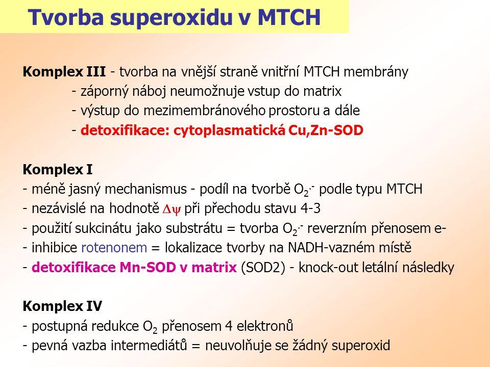 Tvorba superoxidu v MTCH Komplex III - tvorba na vnější straně vnitřní MTCH membrány - záporný náboj neumožnuje vstup do matrix - výstup do mezimembrá