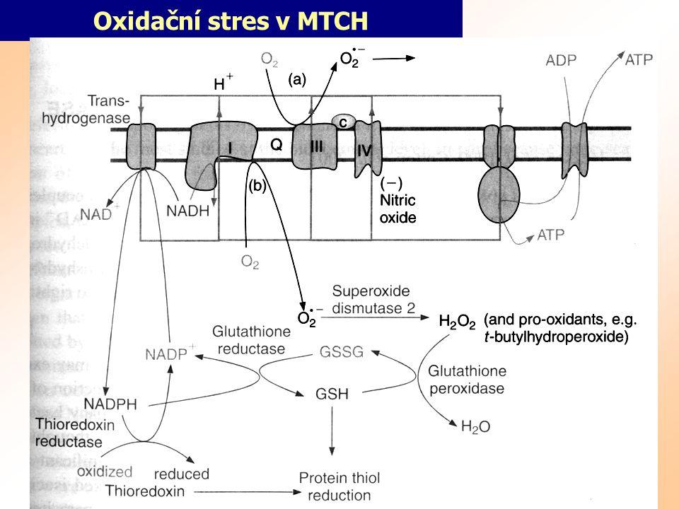Oxidační stres v MTCH