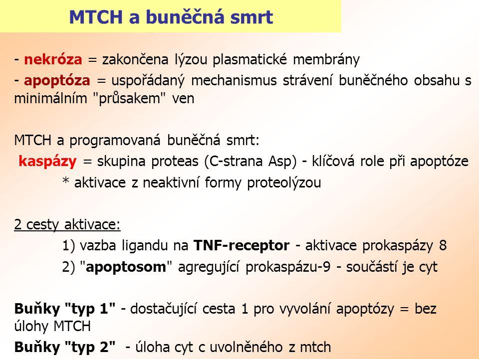 MTCH a buněčná smrt - nekróza = zakončena lýzou plasmatické membrány - apoptóza = uspořádaný mechanismus strávení buněčného obsahu s minimálním