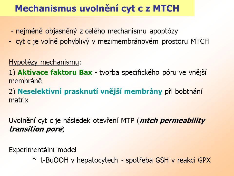 Mechanismus uvolnění cyt c z MTCH - nejméně objasněný z celého mechanismu apoptózy - cyt c je volně pohyblivý v mezimembránovém prostoru MTCH Hypotézy