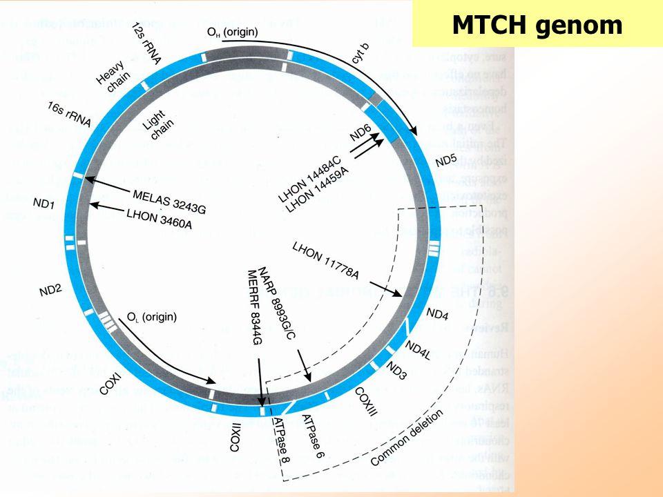 MTCH genom