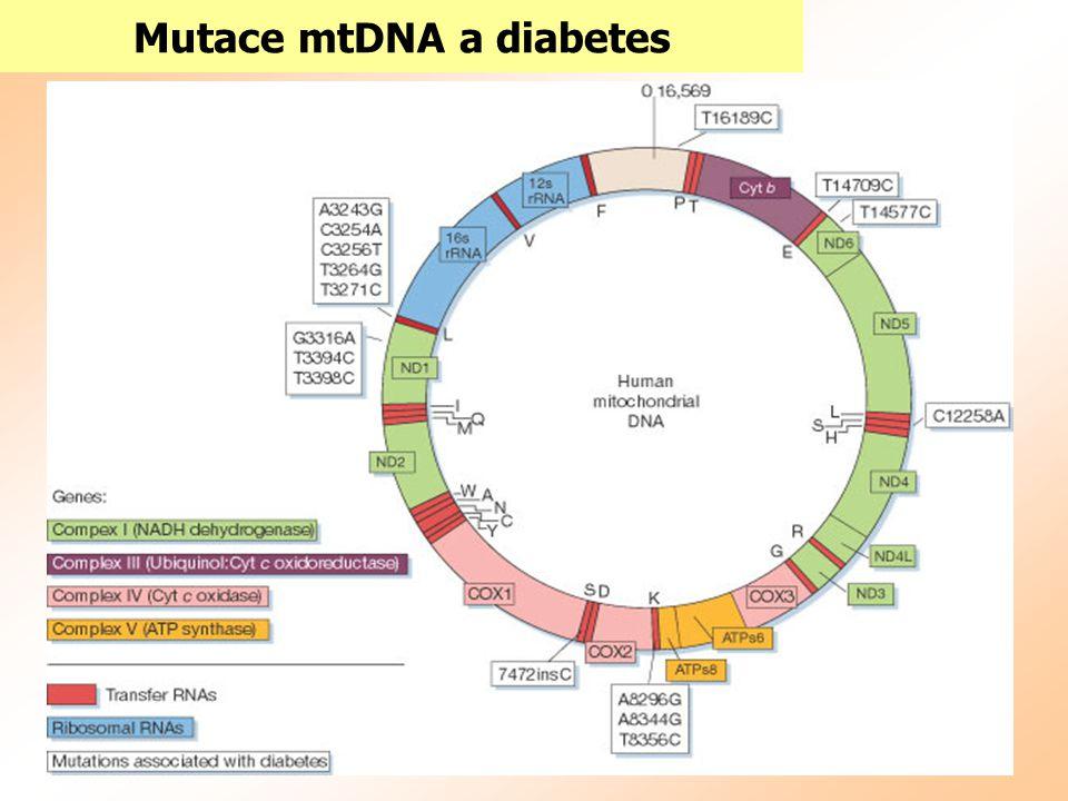Mutace mtDNA a diabetes