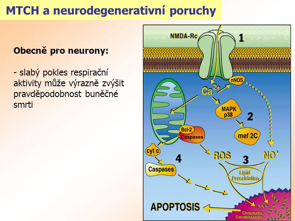 MTCH a neurodegenerativní poruchy Obecně pro neurony: - slabý pokles respirační aktivity může výrazně zvýšit pravděpodobnost buněčné smrti