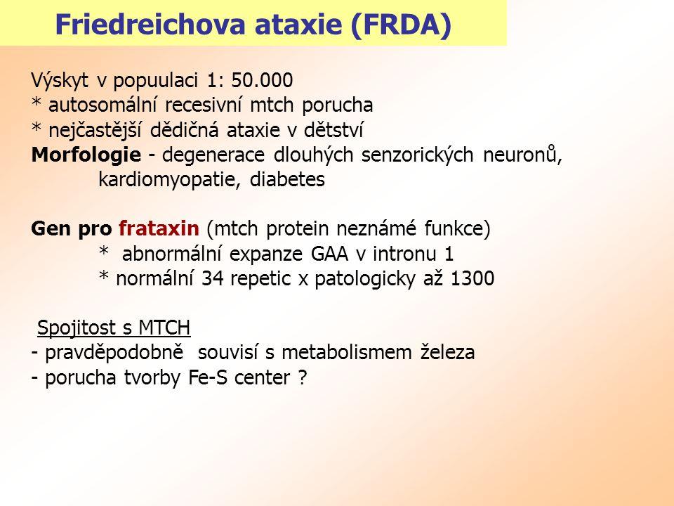 Friedreichova ataxie (FRDA) Výskyt v popuulaci 1: 50.000 * autosomální recesivní mtch porucha * nejčastější dědičná ataxie v dětství Morfologie - dege