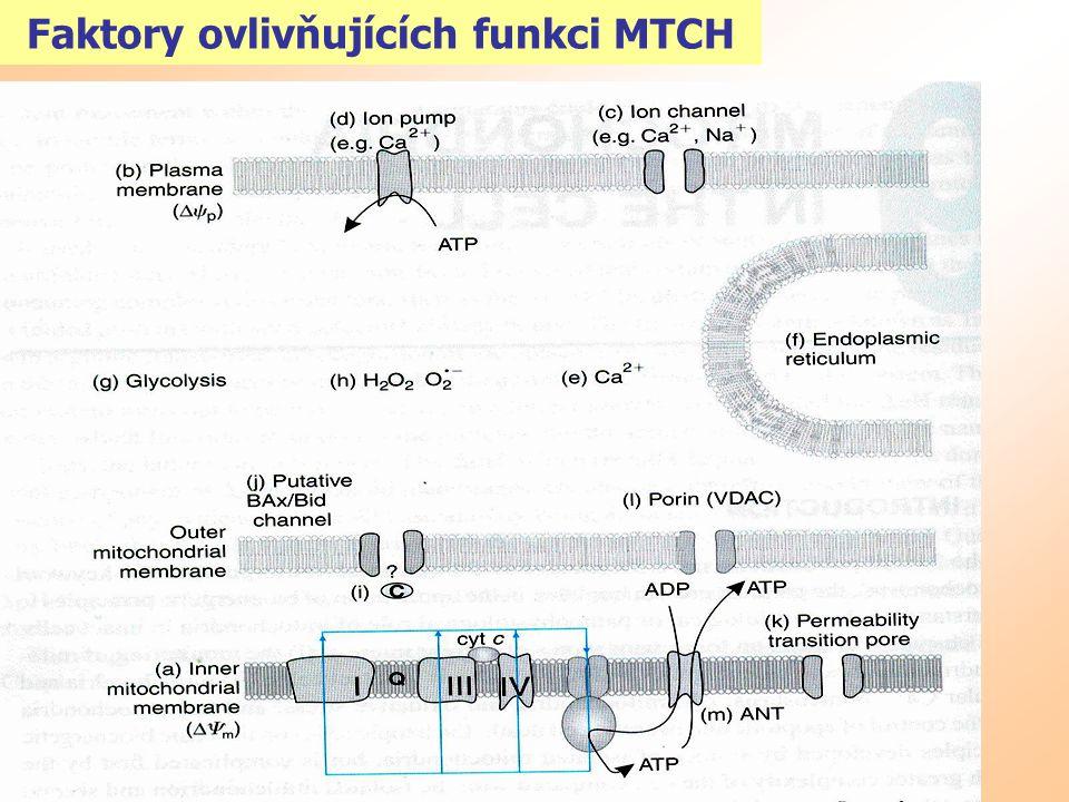 MTCH fission