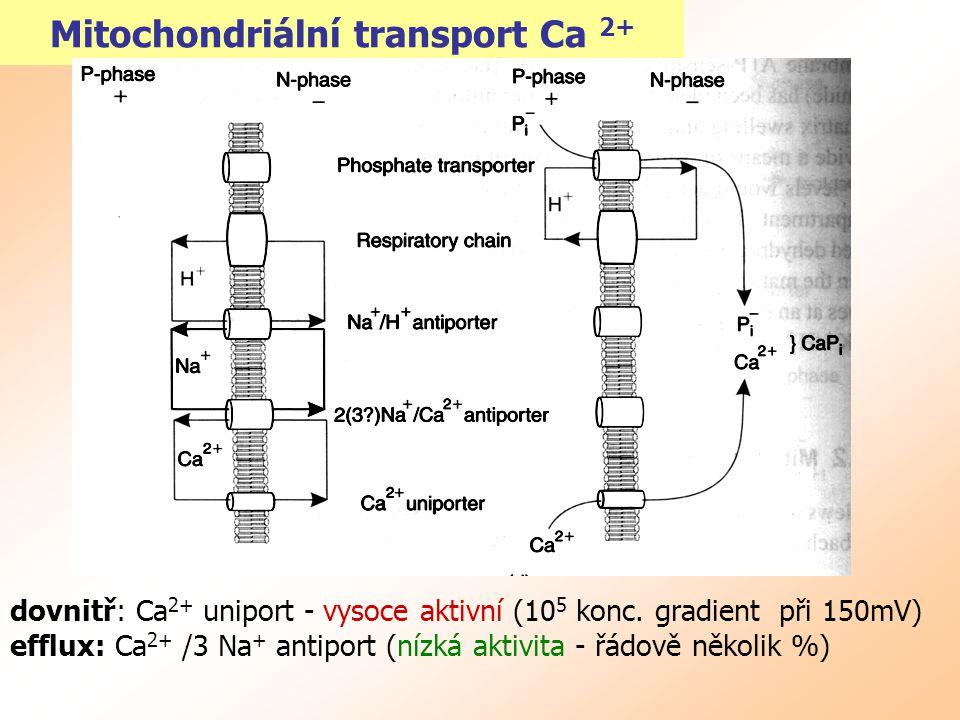 Mitochondriální transport Ca 2+ dovnitř: Ca 2+ uniport - vysoce aktivní (10 5 konc. gradient při 150mV) efflux: Ca 2+ /3 Na + antiport (nízká aktivita