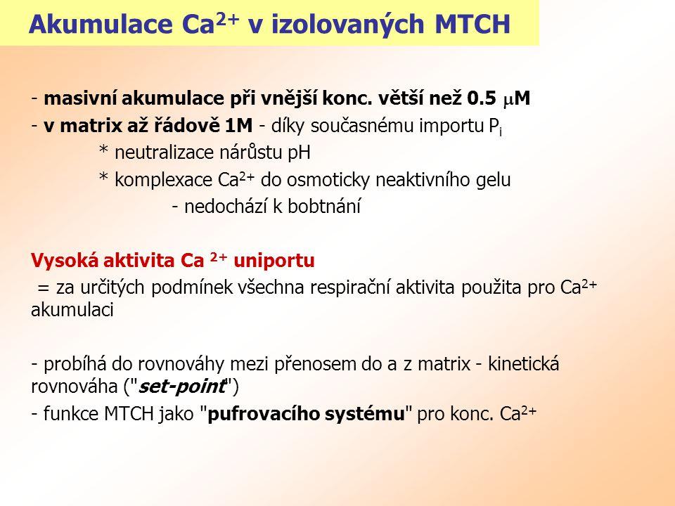 Transport Ca 2+ a regulace MTCH metabolismu Ca 2+ v rozmezí 0.1-1  m reguluje aktivitu enzymů: A) fosfatasa pyruvátdehydrogenasového komplexu - tvorba aktivní defosforylované formy s vyšším V max B) NAD + -isocitrátdehydrogenasa - snížení K m = zvýšení aktivita TCA cyklu při nižší konc.