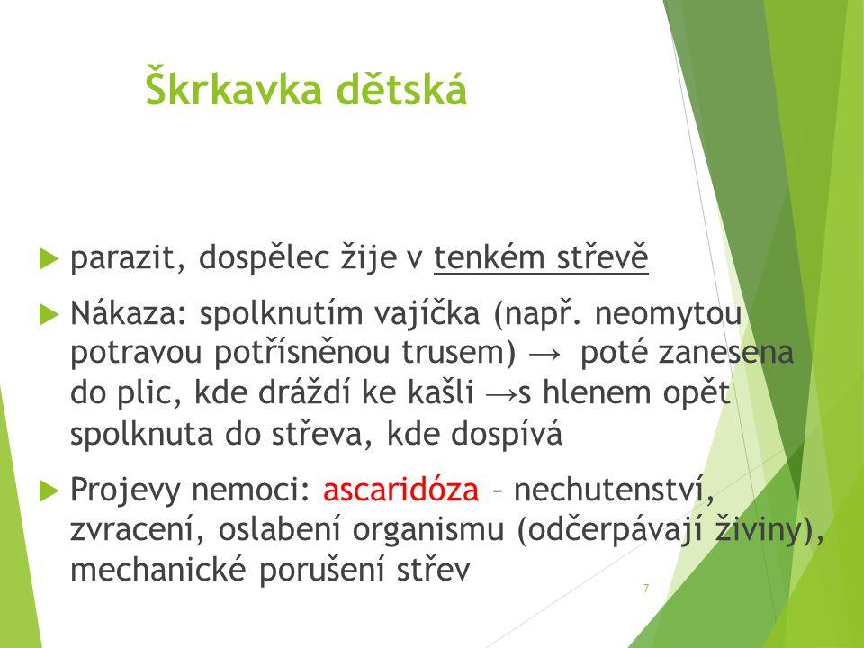 Škrkavka dětská  parazit, dospělec žije v tenkém střevě  Nákaza: spolknutím vajíčka (např. neomytou potravou potřísněnou trusem) → poté zanesena do