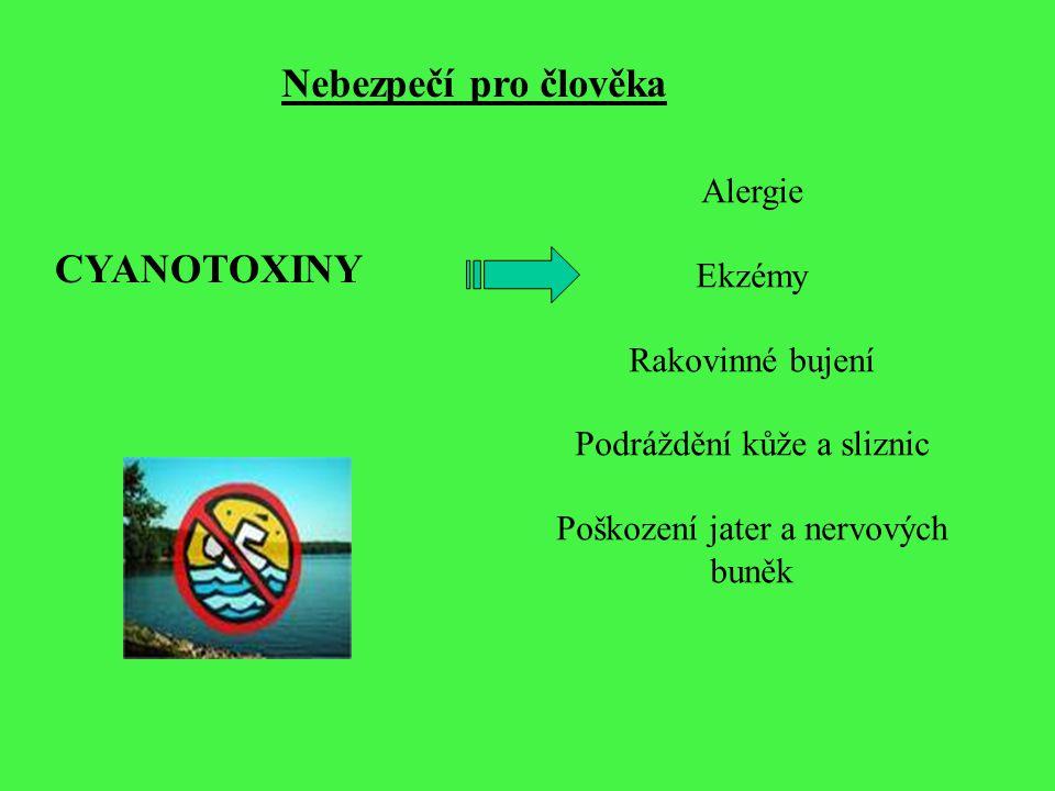 Nebezpečí pro člověka CYANOTOXINY Alergie Ekzémy Rakovinné bujení Podráždění kůže a sliznic Poškození jater a nervových buněk