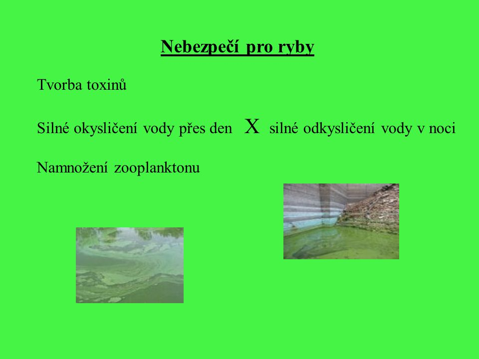 Nebezpečí pro ryby Tvorba toxinů Silné okysličení vody přes den X silné odkysličení vody v noci Namnožení zooplanktonu