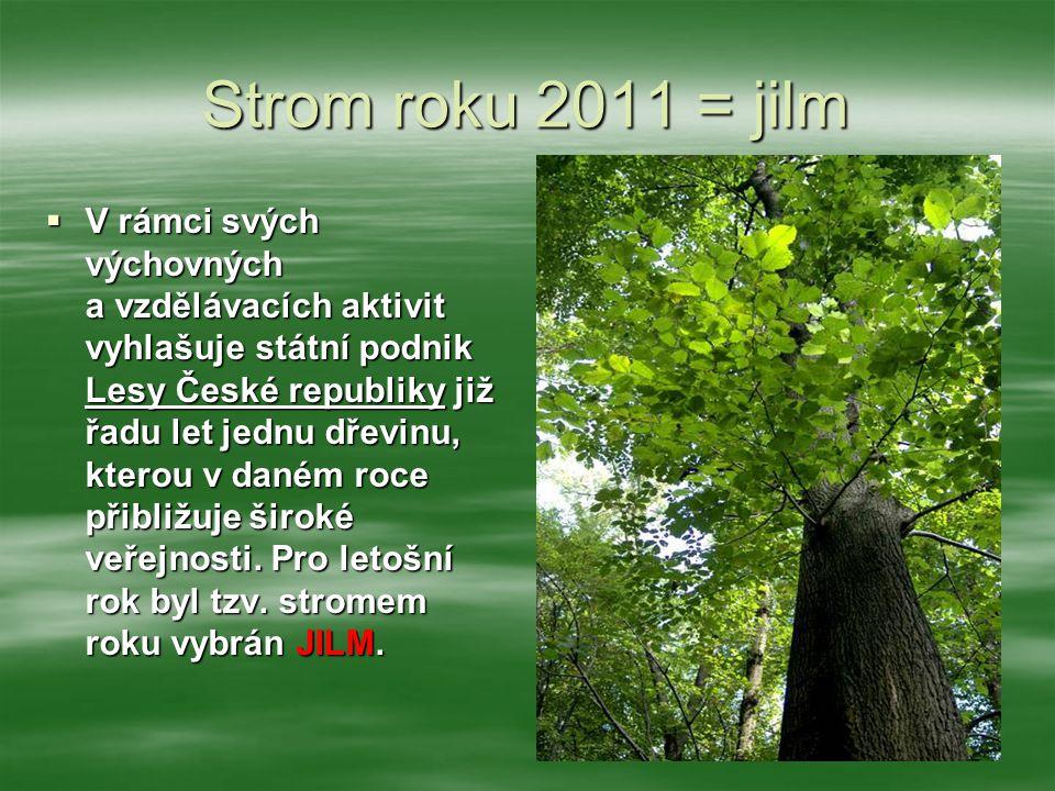 Strom roku 2011 = jilm  V rámci svých výchovných a vzdělávacích aktivit vyhlašuje státní podnik Lesy České republiky již řadu let jednu dřevinu, kter