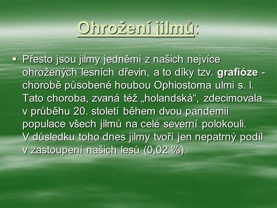 Péče Lesů ČR:  Lesy České republiky, s.p., věnují jilmům velkou pozornost.