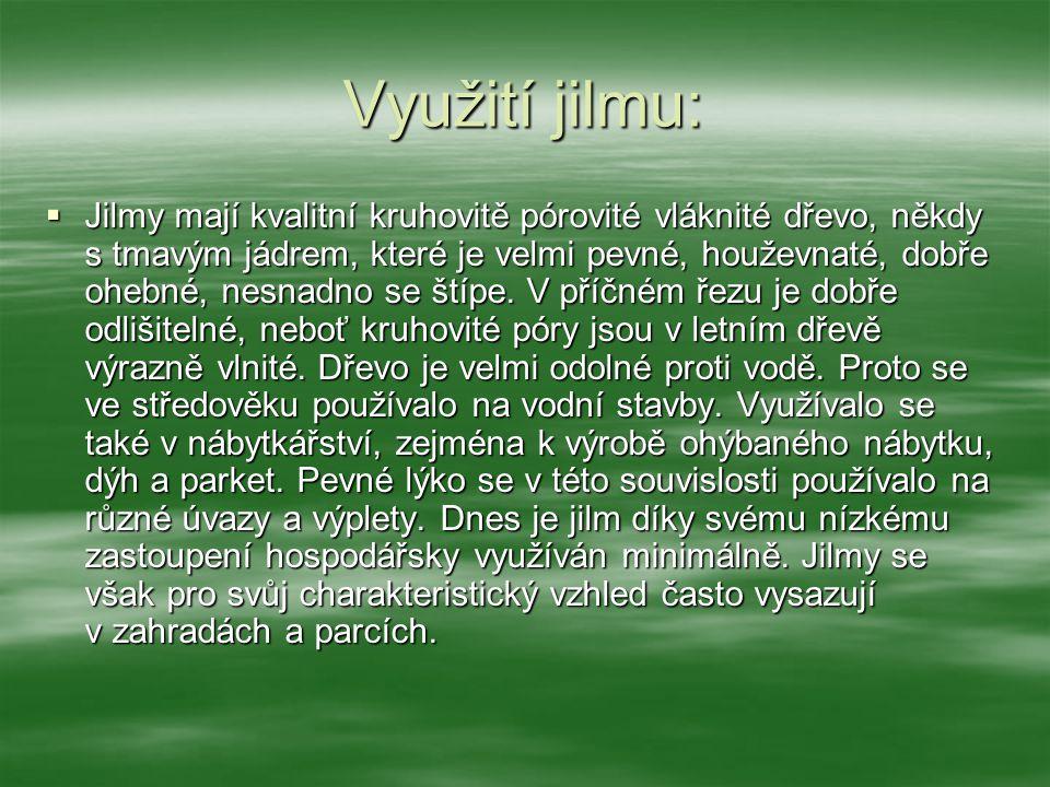 Druhy jilmů:  Na našem území se vyskytují tři druhy jilmů –  jilm horský (Ulmus glabra)  jilm habrolistý (Ulmus minor)  jilm vaz (Ulmus laevis).