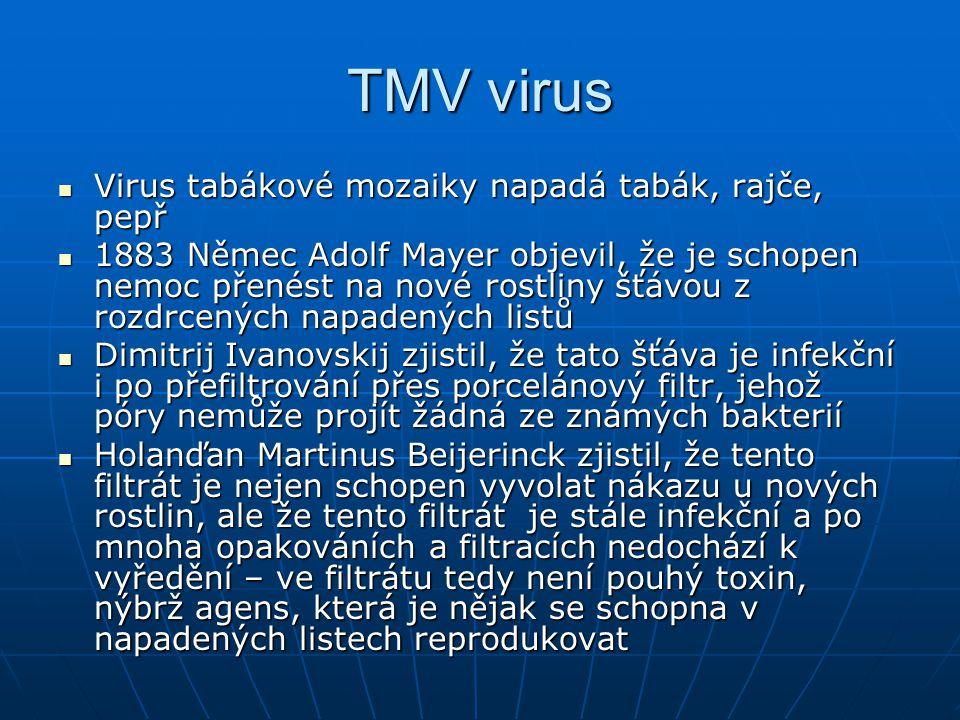 TMV virus Bylo tedy zřejmé že infekční agens se umí reprodukovat a přitom je mnohem menší než nejmenší známá bakterie Bylo tedy zřejmé že infekční agens se umí reprodukovat a přitom je mnohem menší než nejmenší známá bakterie V 1935 Američan Wendell Stanley vytvořil krystal z těchto infekčních částic – žádné buňky ale nemohou vytvořit pravidelný krystal.
