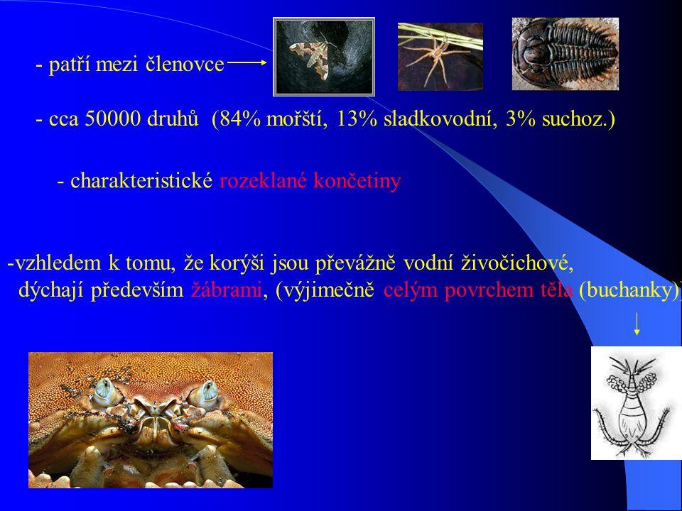 - patří mezi členovce - cca 50000 druhů (84% mořští, 13% sladkovodní, 3% suchoz.) - charakteristické rozeklané končetiny -vzhledem k tomu, že korýši j