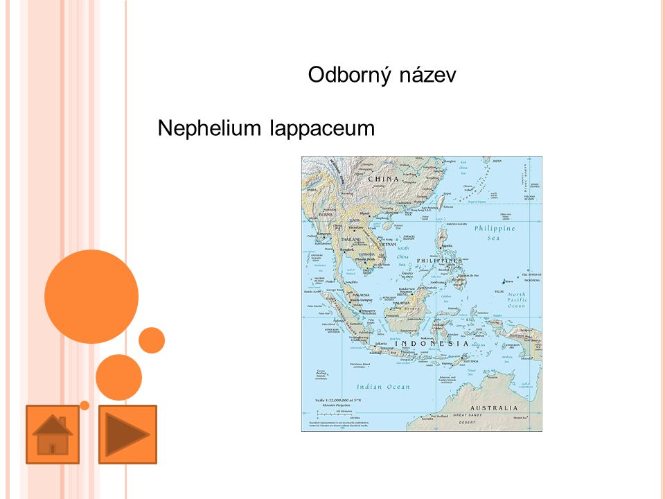 Odborný název Nephelium lappaceum