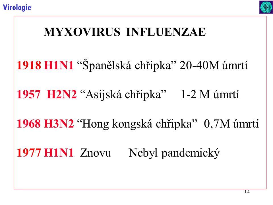14 Virologie 1918 H1N1 Španělská chřipka 20-40M úmrtí 1957 H2N2 Asijská chřipka 1-2 M úmrtí 1968 H3N2 Hong kongská chřipka 0,7M úmrtí 1977H1N1 Znovu Nebyl pandemický MYXOVIRUS INFLUENZAE
