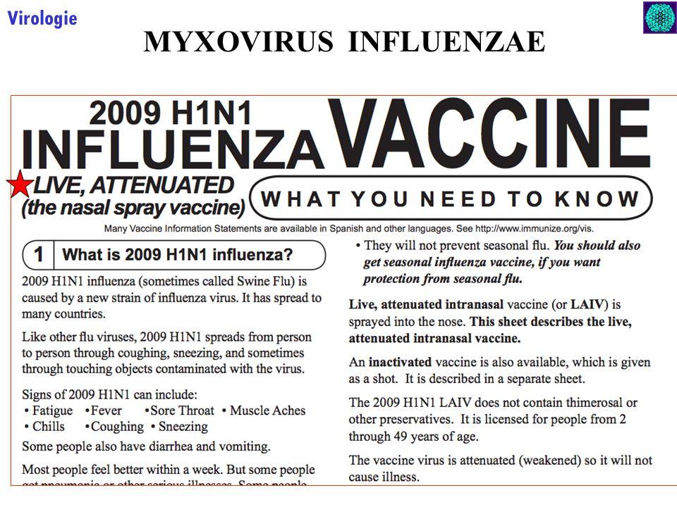 24 Virologie MYXOVIRUS INFLUENZAE