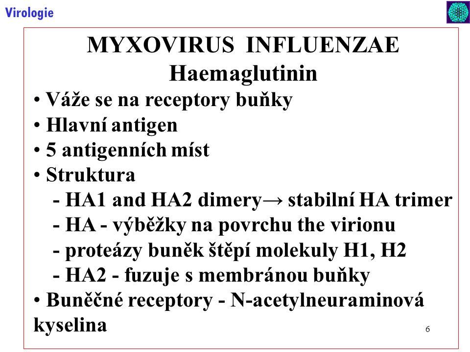 6 Virologie MYXOVIRUS INFLUENZAE Haemaglutinin Váže se na receptory buňky Hlavní antigen 5 antigenních míst Struktura - HA1 and HA2 dimery→ stabilní HA trimer - HA - výběžky na povrchu the virionu - proteázy buněk štěpí molekuly H1, H2 - HA2 - fuzuje s membránou buňky Buněčné receptory - N-acetylneuraminová kyselina