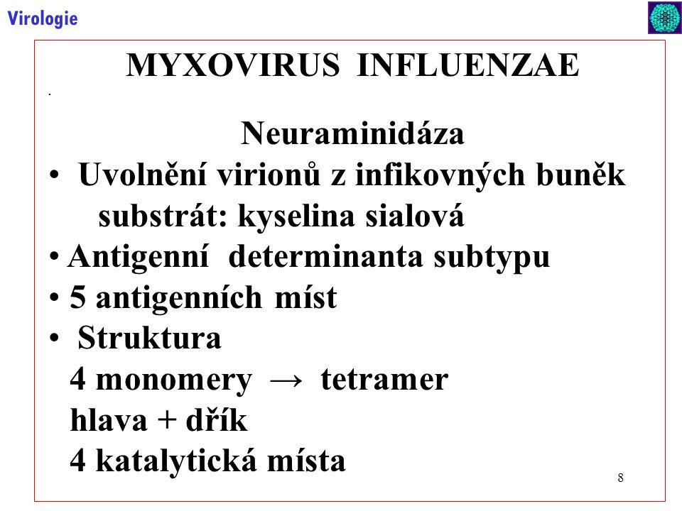 9 Virologie MYXOVIRUS INFLUENZAE Mírná změna antigenu (drift) Silná změna antigenu (shift) Haemagglutinin HA Neuraminidáza NA Antigenic shift Antigenic drift