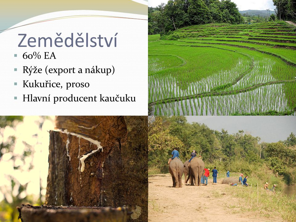 Zemědělství  60% EA  Rýže (export a nákup)  Kukuřice, proso  Hlavní producent kaučuku
