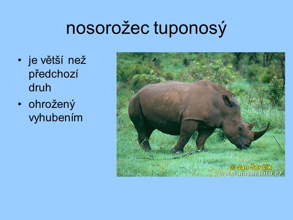 nosorožec indický 1 roh kůže vytváří štíty