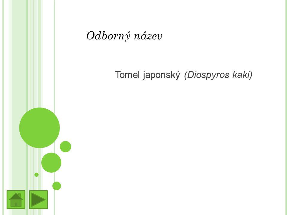 Odborný název Tomel japonský (Diospyros kaki)
