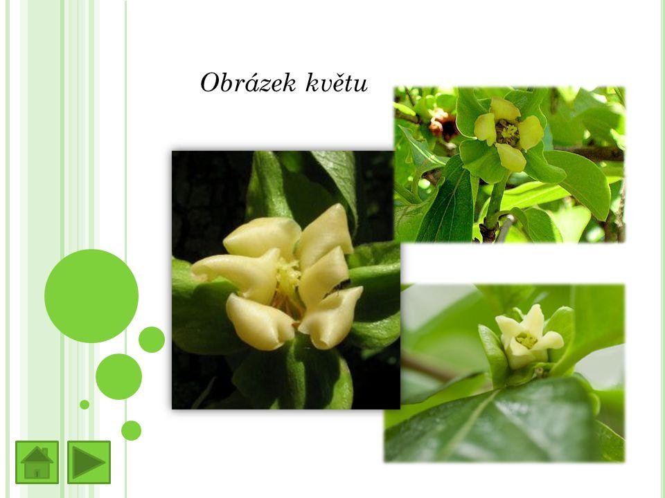 Obrázek květu