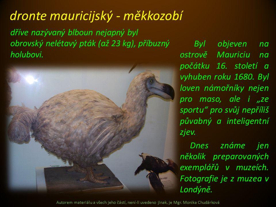 Autorem materiálu a všech jeho částí, není-li uvedeno jinak, je Mgr. Monika Chudárková Byl objeven na ostrově Mauriciu na počátku 16. století a vyhube