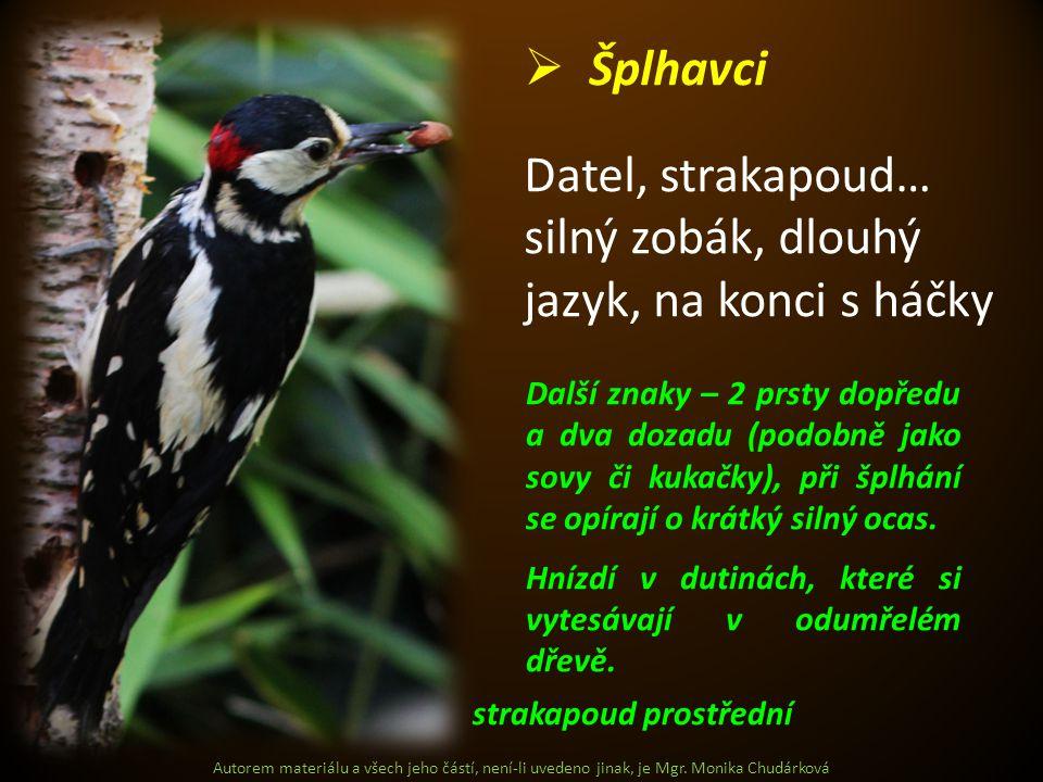 Autorem materiálu a všech jeho částí, není-li uvedeno jinak, je Mgr. Monika Chudárková  Šplhavci Datel, strakapoud… silný zobák, dlouhý jazyk, na kon