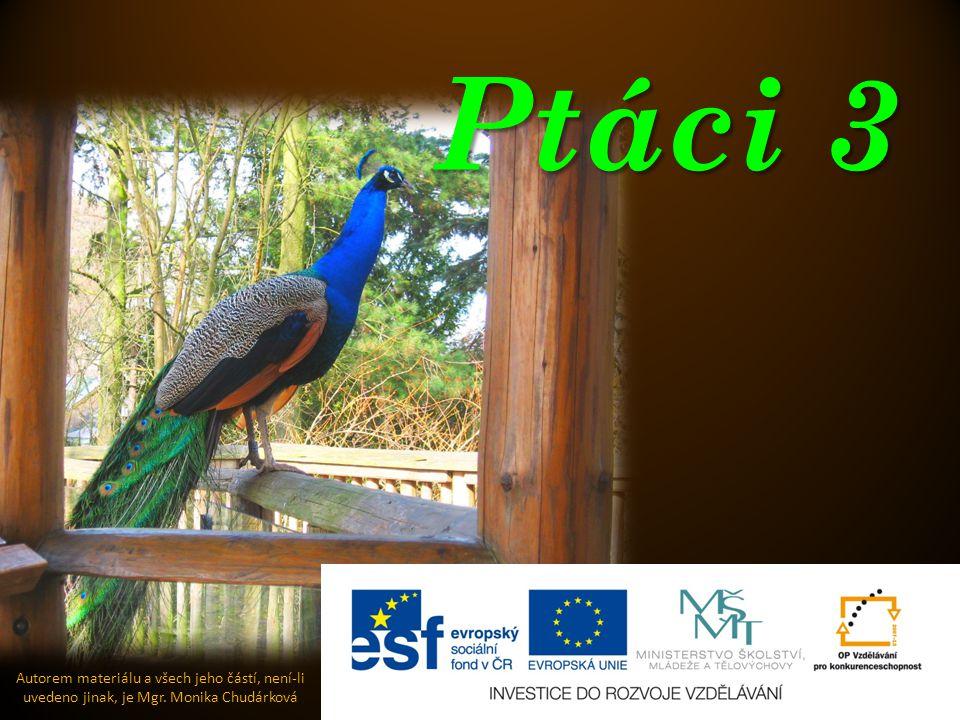 Ptáci 3 Autorem materiálu a všech jeho částí, není-li uvedeno jinak, je Mgr. Monika Chudárková