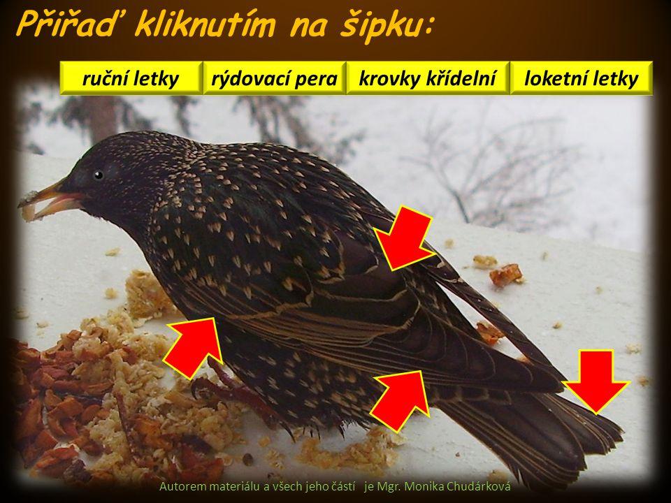 Autorem materiálu a všech jeho částí je Mgr. Monika Chudárková loketní letkykrovky křídelní ruční letky rýdovací pera Přiřaď kliknutím na šipku:
