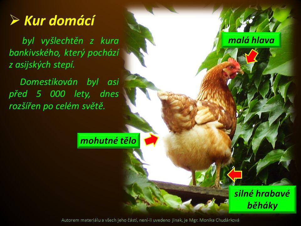 Autorem materiálu a všech jeho částí, není-li uvedeno jinak, je Mgr. Monika Chudárková  Kur domácí byl vyšlechtěn z kura bankivského, který pochází z