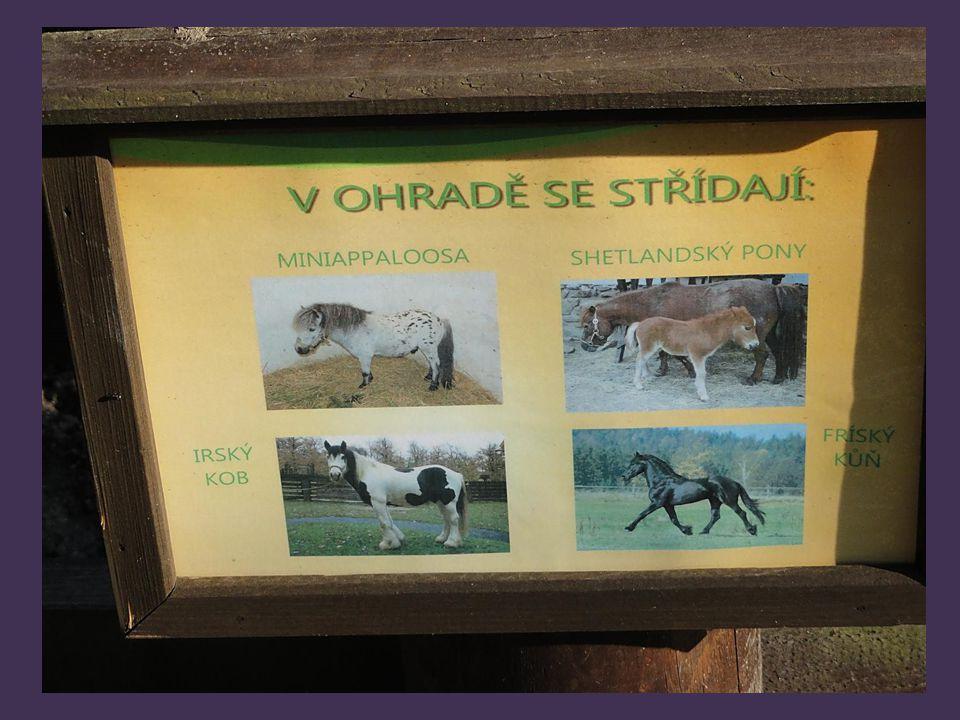 V ohradě se střídají koně, druhy jsou uvedeny v dalším okně