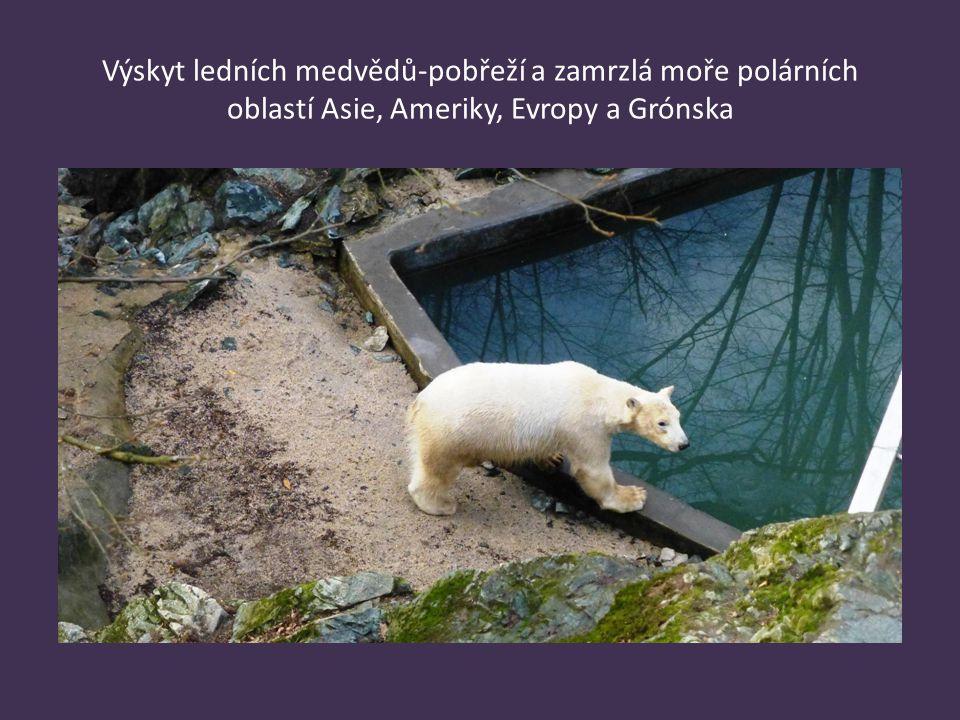 Medvěd lední velikost - délka těla samice 190 až 210 cm, váha 200 až 400 kg délka těla samce 240 až 260 cm, váha 400 až 800 kg