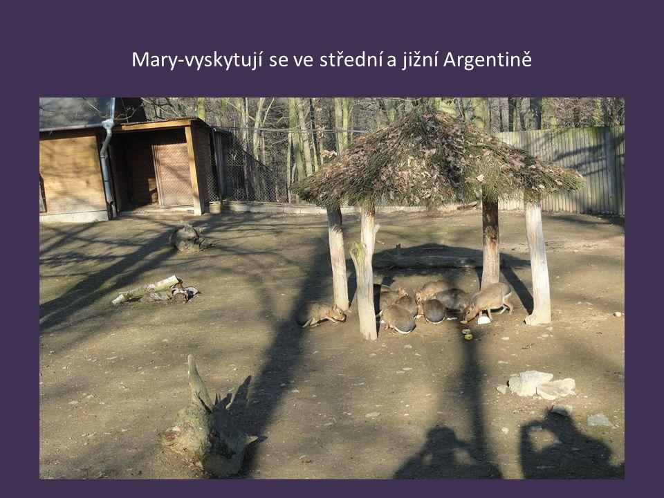 Mary-vyskytují se ve střední a jižní Argentině