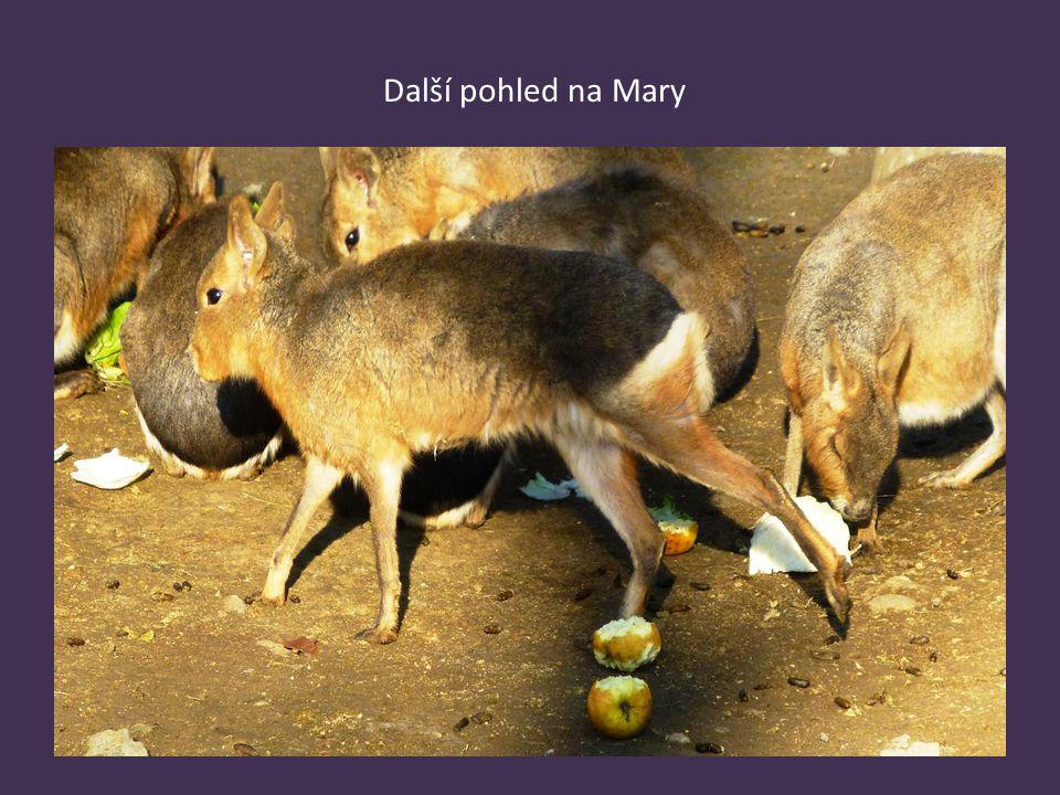Další pohled na Mary