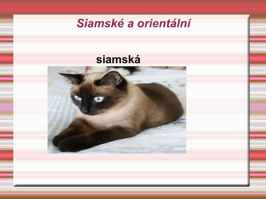 Siamské a orientální siamská