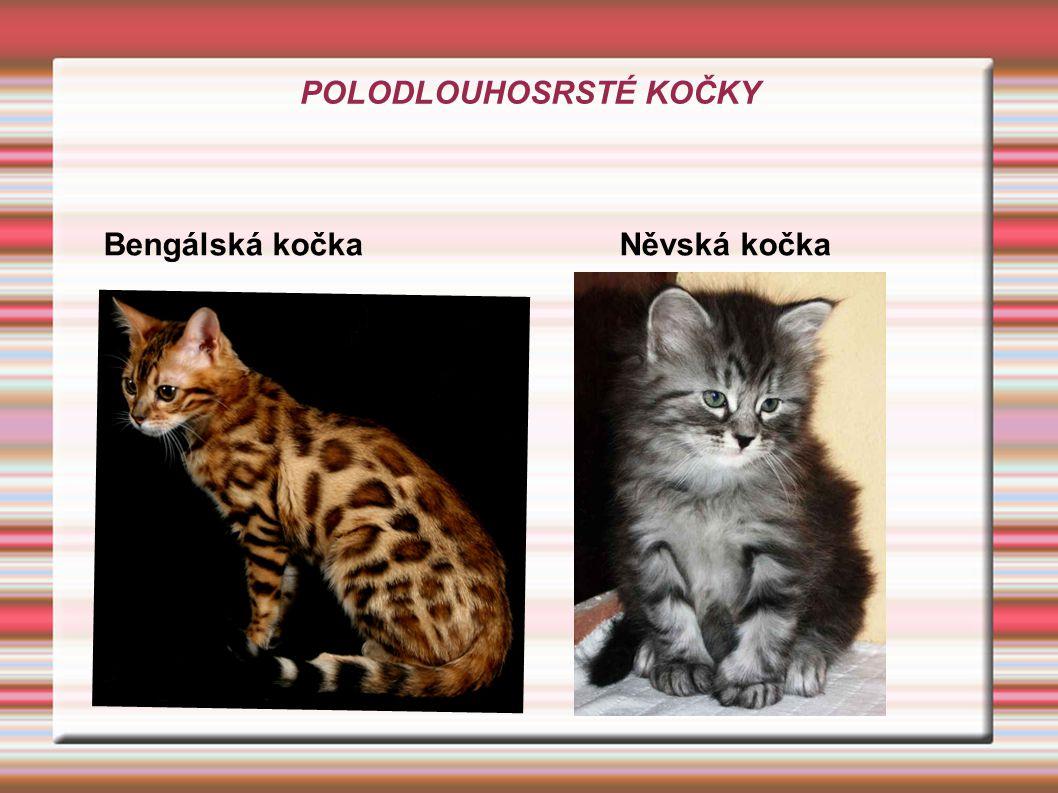 POLODLOUHOSRSTÉ KOČKY Bengálská kočka Něvská kočka