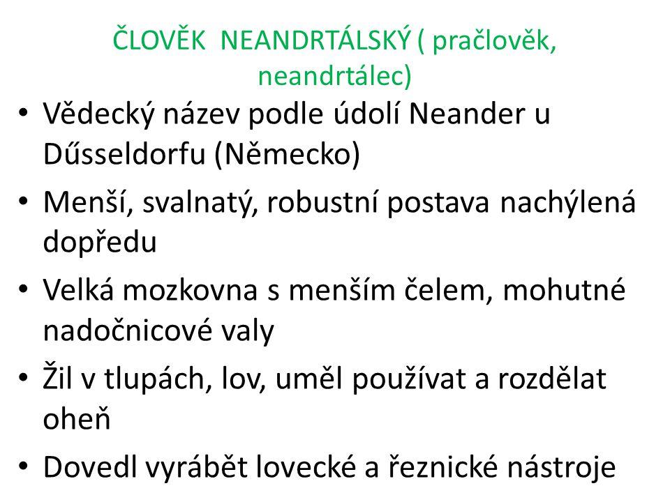 ČLOVĚK NEANDRTÁLSKÝ ( pračlověk, neandrtálec) Vědecký název podle údolí Neander u Dűsseldorfu (Německo) Menší, svalnatý, robustní postava nachýlená do
