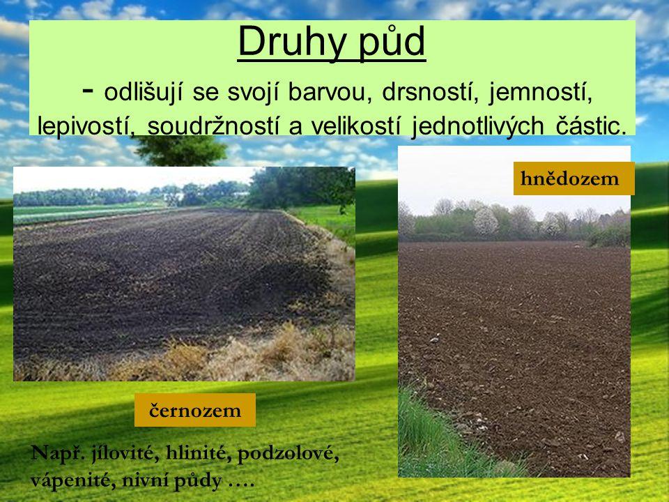 Druhy půd - odlišují se svojí barvou, drsností, jemností, lepivostí, soudržností a velikostí jednotlivých částic. černozem hnědozem Např. jílovité, hl