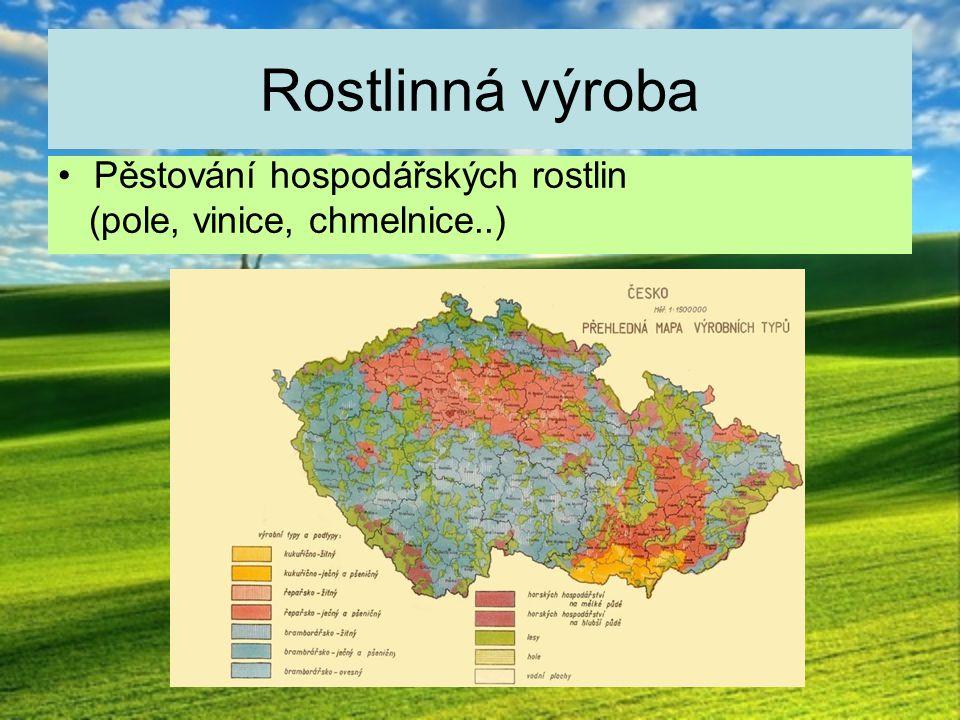 Nížiny – teplé oblasti Nejúrodnější půdy - černozemně Pěstuje se zde: pšenice, kukuřice, cukrová řepa V nejteplejších oblastech se pěstuje ovoce a zelenina, vinná réva, chmel Chov prasat a drůbeže