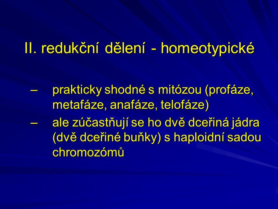 II. redukční dělení - homeotypické –prakticky shodné s mitózou (profáze, metafáze, anafáze, telofáze) –ale zúčastňují se ho dvě dceřiná jádra (dvě dce
